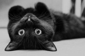 black-cat-for-halloween-1